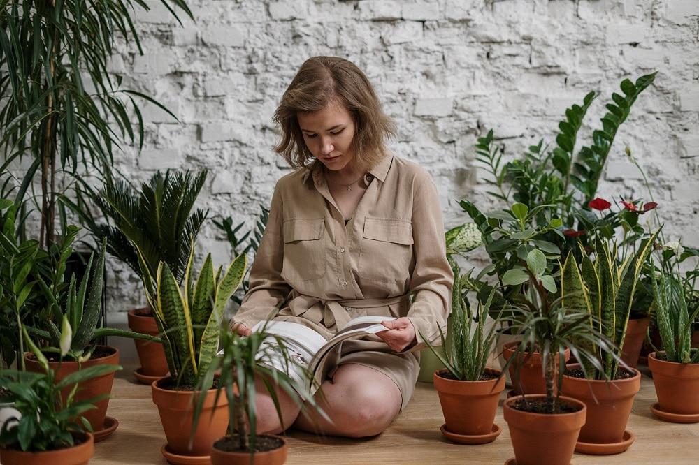 10 meilleures plantes d'intérieur et comment les entretenir