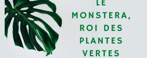 Ce qu'il faut savoir pour sa plante Monstrera