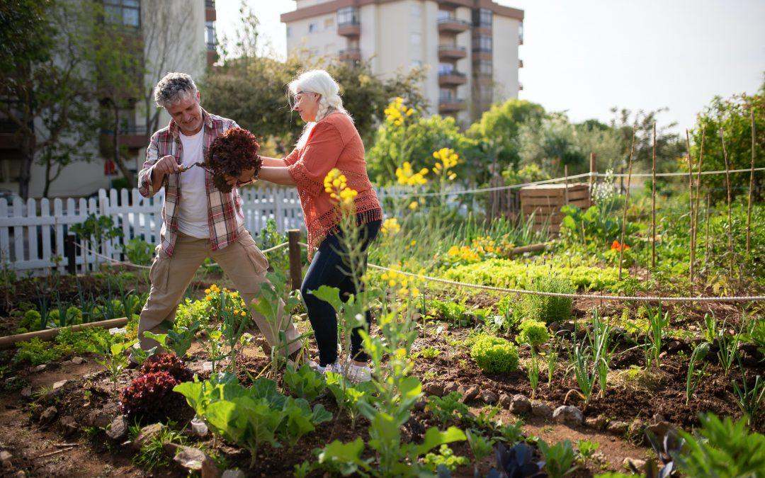 Visite du jardin : : Un généreux jardin potager pour éveiller les sens – coco kelley coco kelley