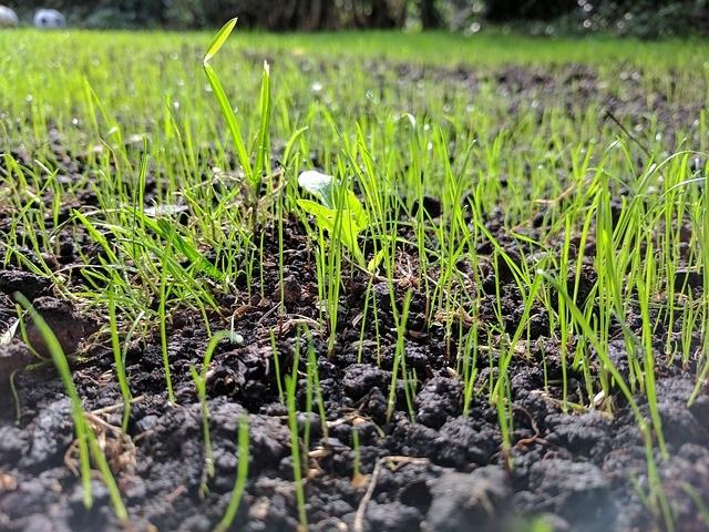 plantation pelouse