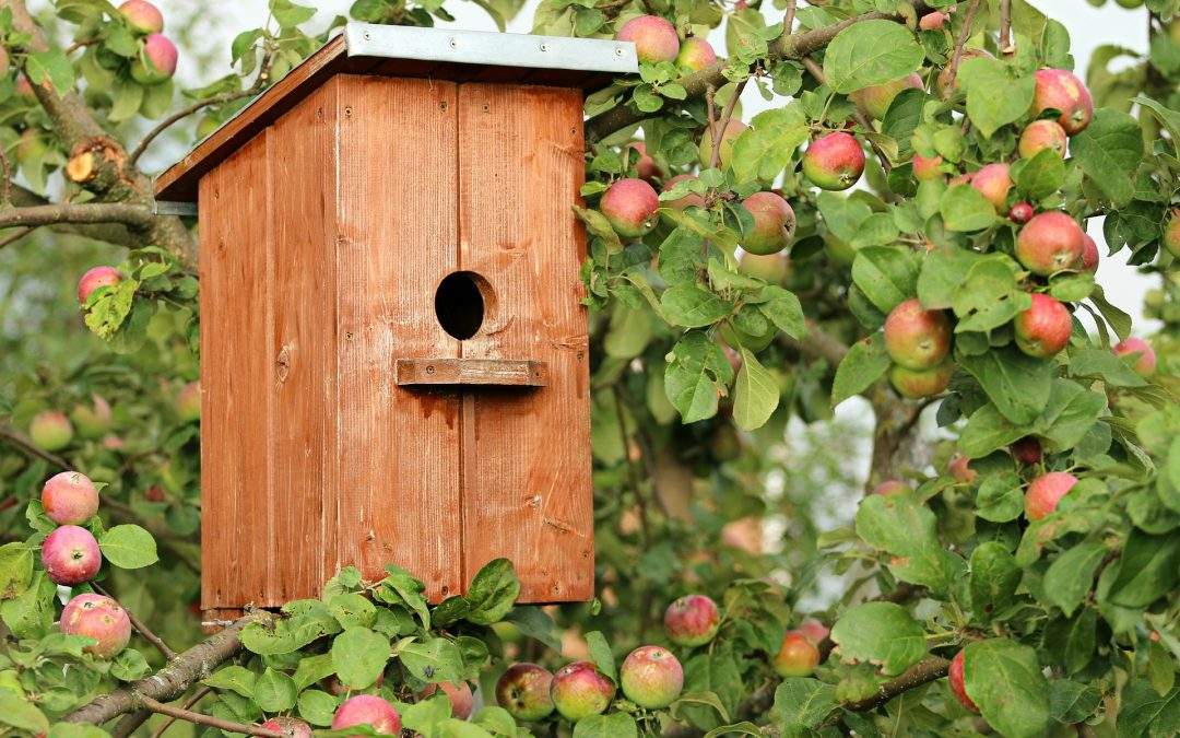Maisons d'oiseaux créatives et uniques
