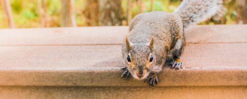5 conseils pour protéger votre nouvelle maison des parasites